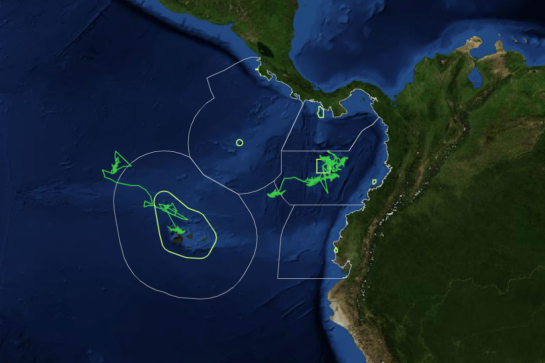 Detail of an interactive map showing shark migrations.